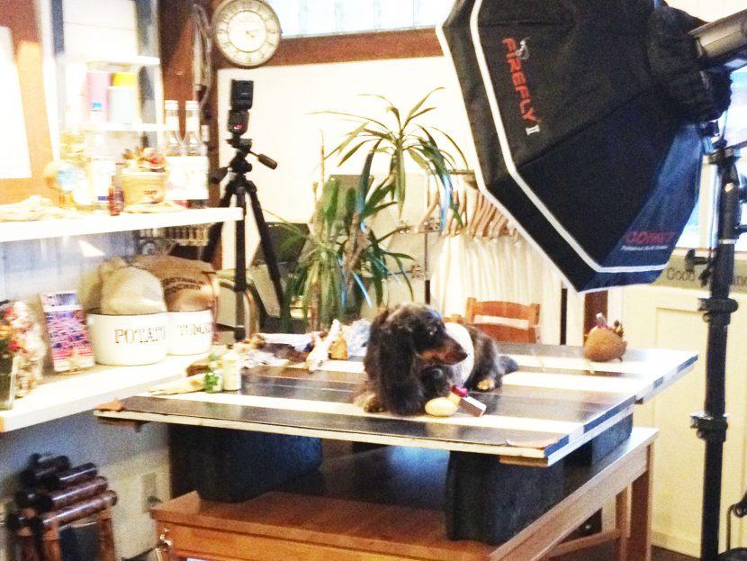 ペット犬の仕込みや撮影会やオフ会、写真教室も可能